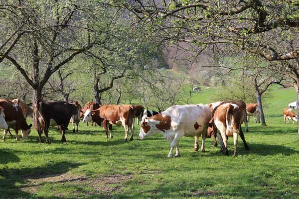 Bauernhof 5_1617-12